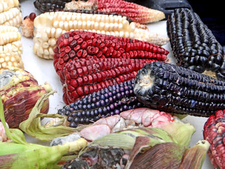 Mexican corn diversity, red, blue and white corn