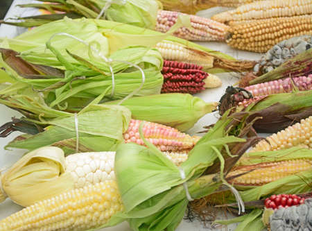 Mexican corn diversity Stock Photo