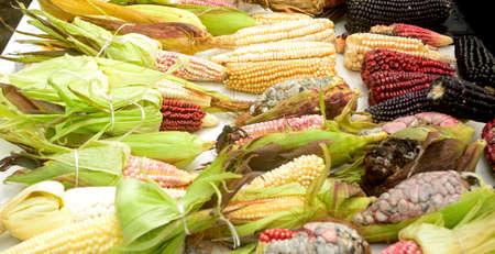 メキシコのトウモロコシの多様性 写真素材