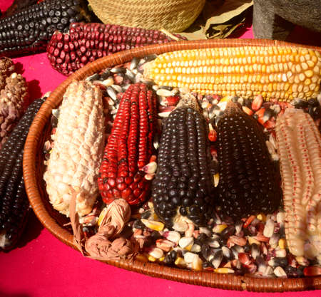 Mexican corn diversity, white corn, black corn, blue corn, red corn, wild corn and yellow corn at a local market in Mexico Banco de Imagens