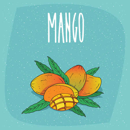 Group of several ripe mangoes fruits with leaves, whole and beautifully cut into pieces. Visible flesh. Isolated background. Realistic hand draw style. Lettering Mango Illustration
