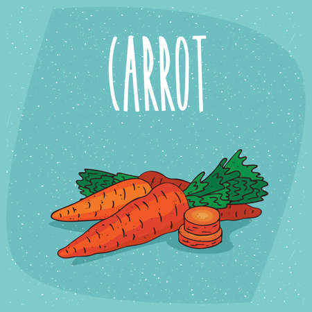 Ripe root vegetables carrots with small leaves, whole and beautifully cut into pieces. Visible flesh. Isolated background. Realistic hand draw style. Lettering Carrot Illustration