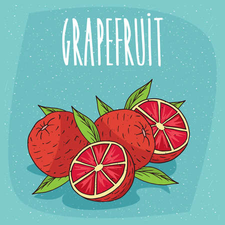 Several ripe grapefruit fruits with leaves, whole and beautifully cut into pieces. Visible flesh. Isolated background. Realistic hand draw style. Lettering Grapefruit