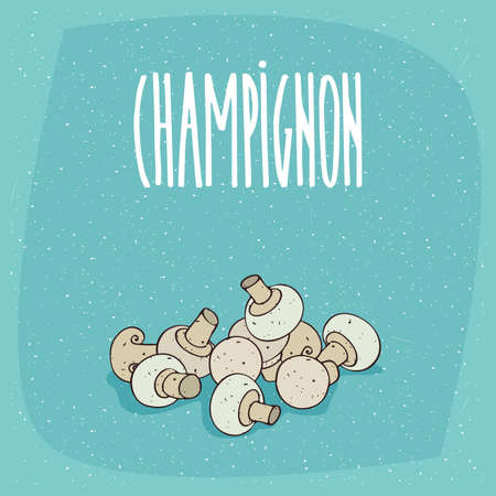 Group of several ripe white mushrooms of species bisporus. Beautifully cut, visible section. Isolated blue background. Realistic hand draw style. Lettering Champignon
