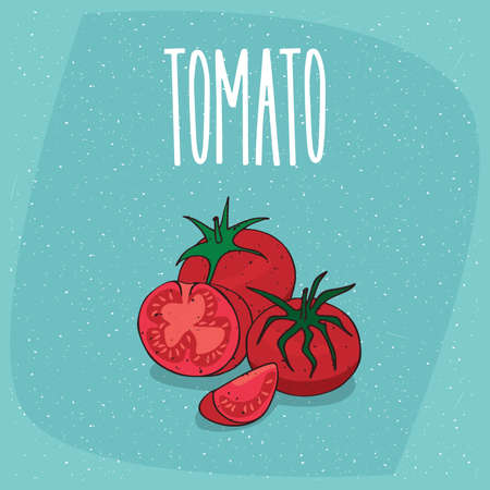 Ripe fruits tomatoes vegetable, whole and beautifully cut into pieces. Visible flesh and seeds. Isolated background. Realistic hand draw style. Lettering Tomato