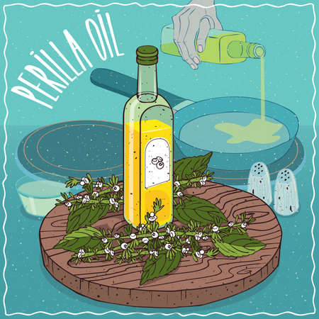 Glass bottle of Perilla seed oil and Perilla frutescens plant. Hand pouring oil on frying pan. Natural vegetable oil used for frying food