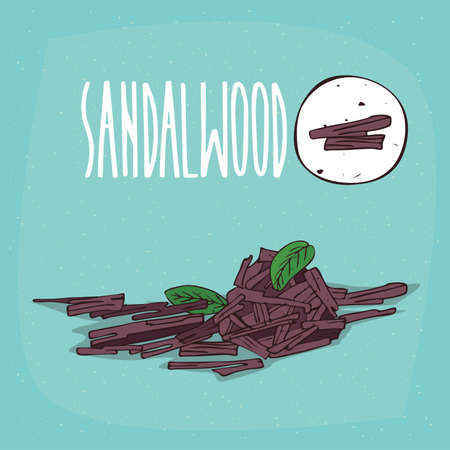 Set of isolated plant Sandalwood sticks herb with leaves, chips, billets, Simple round icon of Sandal on white background, Lettering inscription Sandalwood