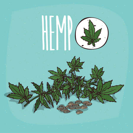 Set of isolated plant Hemp leaves herb with seeds, Simple round icon of Cannabis sativa on white background, Lettering inscription Hemp