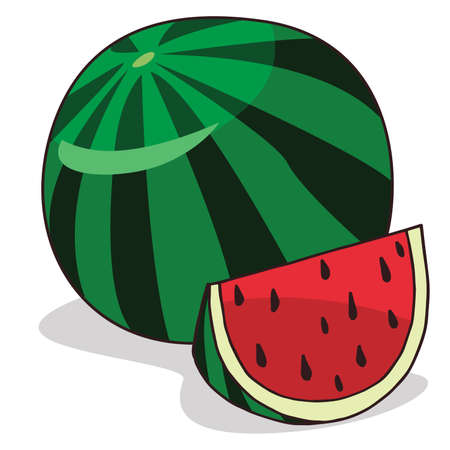 Isolate ripe watermelon fruit on white background. Close up clipart with shadow in flat realistic cartoon style. Hand drawn icon