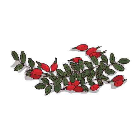 Isolated clipart Rose petals Illustration