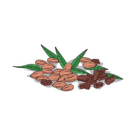 Isolated clip-art pecan illustration on white background.