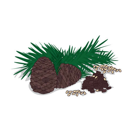 Isolated clipart Pine nut  イラスト・ベクター素材