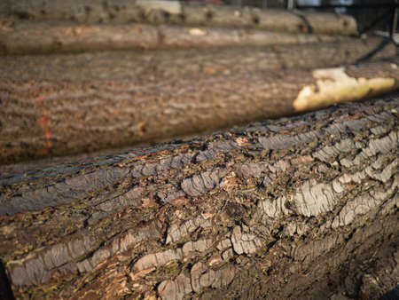 splitting up: Close up of a wood bark of tree trunks