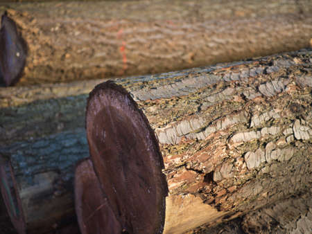 woodcutting: Close up of a wood bark of tree trunks