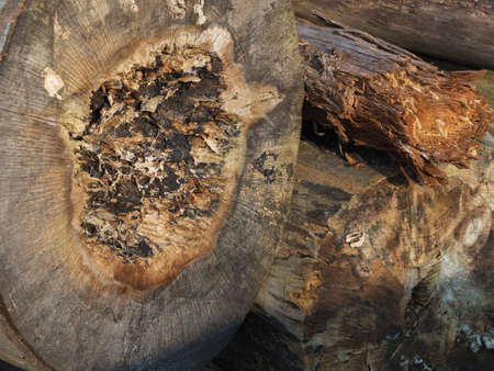 woodcutting: Macro of tree cross section Stock Photo