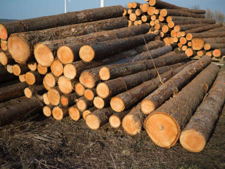 pile of logs: stacked sawed pine logs in a pile