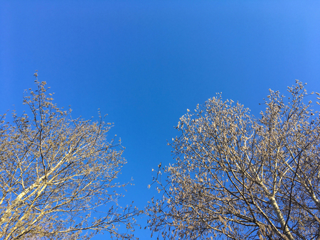 Tree tops against blue sky. Stock Photo