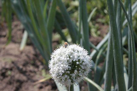 Pollination Banco de Imagens