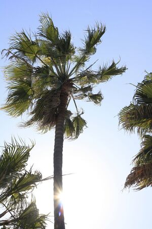 breezy: Breezy Tree