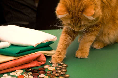 Threads, textile, buttons and cat photo