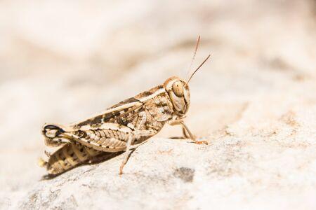 beautifull grasshoper portrait