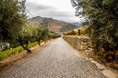 VERY BEAUTIFULL VIEW FROM A VINYARD ROAD IN PORTUGAL Archivio Fotografico