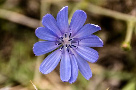 A CLOSE UP ON A VERY BEAUTIFULL BLUE FLOWER