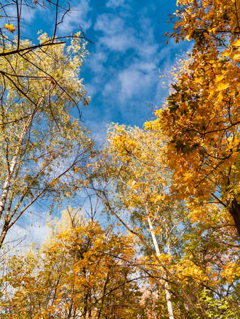 View of the blue sky surrounded by autumn trees