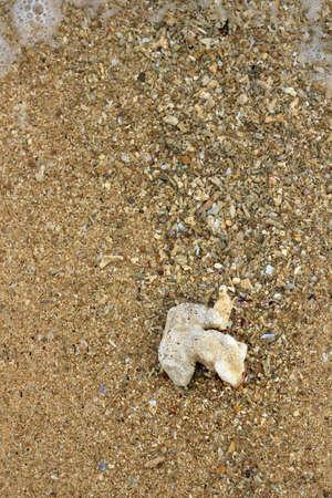 labyrinthine: Single coral on sand.