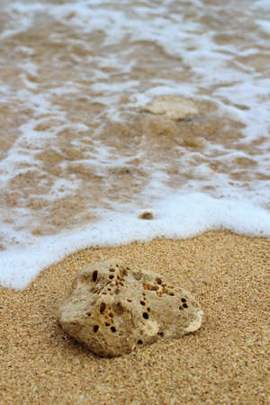 labyrinthine: Coral on the beach hit by wave.