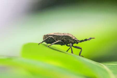 La photo en gros plan de l'insecte sur une feuille avec un arrière-plan flou