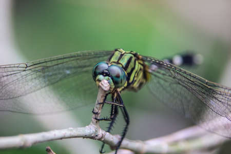 close up photo of dragonfly on a leaf with a blurred background