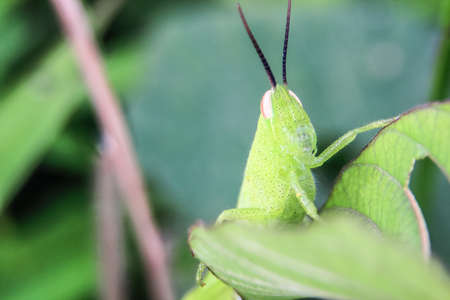close-up photo of grasshopper with many dots on the face with blurred background 写真素材