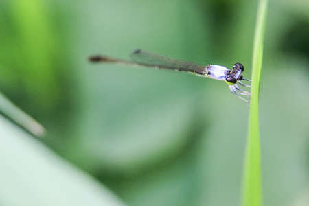 close up photo of a large-eyed dragonfly on a branch with a blurred background