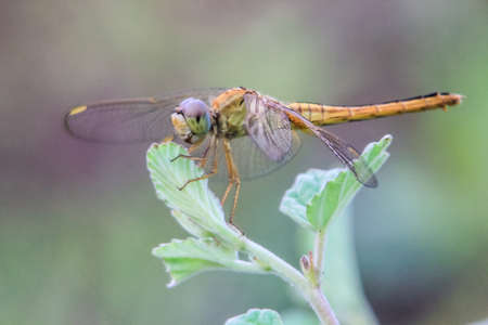 close up photo of a dragonfly on a leaf with a blurred background 写真素材