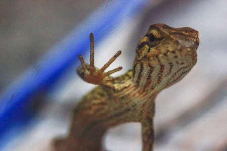 close-up photo of a lizard inviting high fives 版權商用圖片