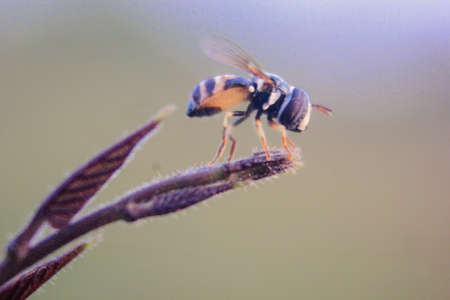 fruit flies that try to rest on grass stalks with a blurred background