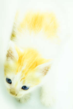kittens are curious about the camera and actually pose when they take pictures Reklamní fotografie