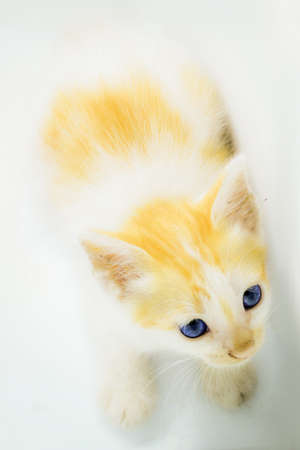 kittens are curious about the camera and actually pose when they take pictures