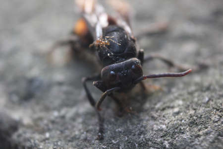 a photograph of a stinging bee that is dying and surrounded by ants for them to eat