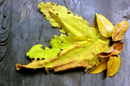 Dry old leaves fall and accumulate, becoming a nest for insects and worms, making the yard look messy and dirty if you forget to clean it Reklamní fotografie