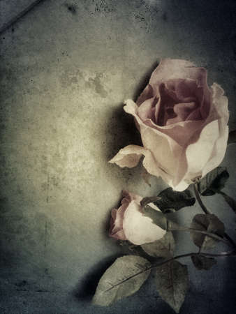 Romantic pink roses on shaded background, grunge filter with fingerprints Reklamní fotografie - 51435951