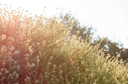 cross procesed: wild flowers in the morning sun Stock Photo