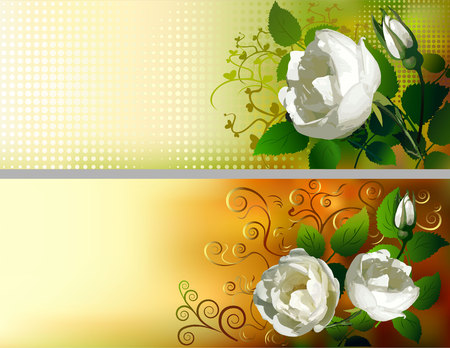 Floral Background, banner, invitation, greeting card with white roses Vector illustration. Ilustracja