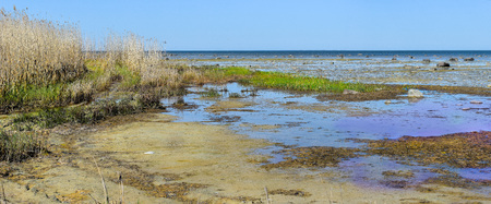 Virgin swamp seascape with puddles of water,  green grass, reeds, stones and sand at Baltic sea at springtime in Estonia