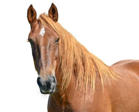Horse head isolated on white background