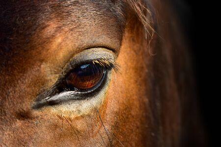 Horse eye on black background