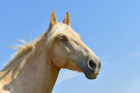 Horse head isolated on blue sky background Banque d'images