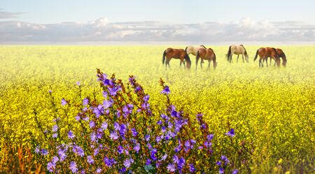 Horses grazing at wildflowers field