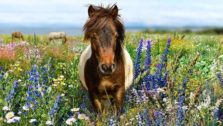 Pony at wildflower field